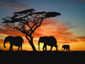African-Elephant-Namibia-Wallpapers
